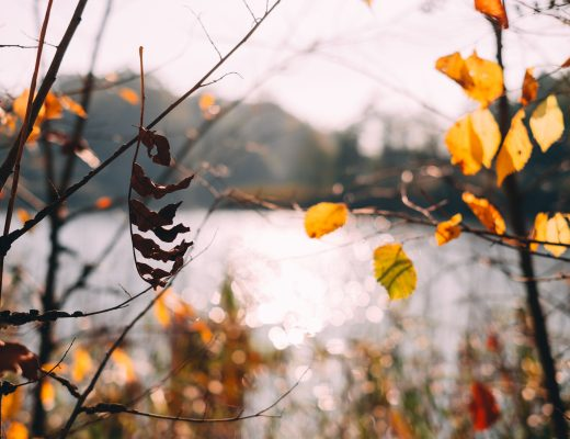 autumn_tree_twigs_by_the_lake